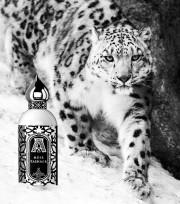 39093098 – snow leopard walking in snow